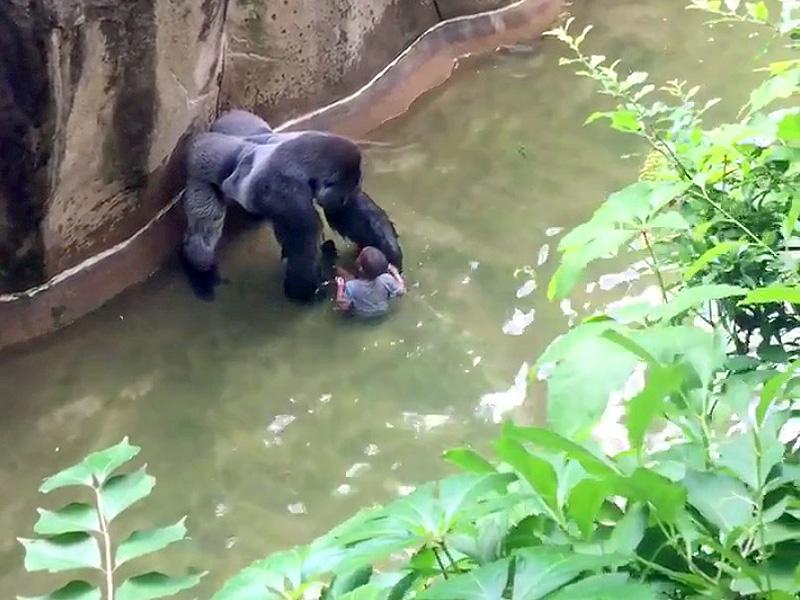 gorilla-boy-800b